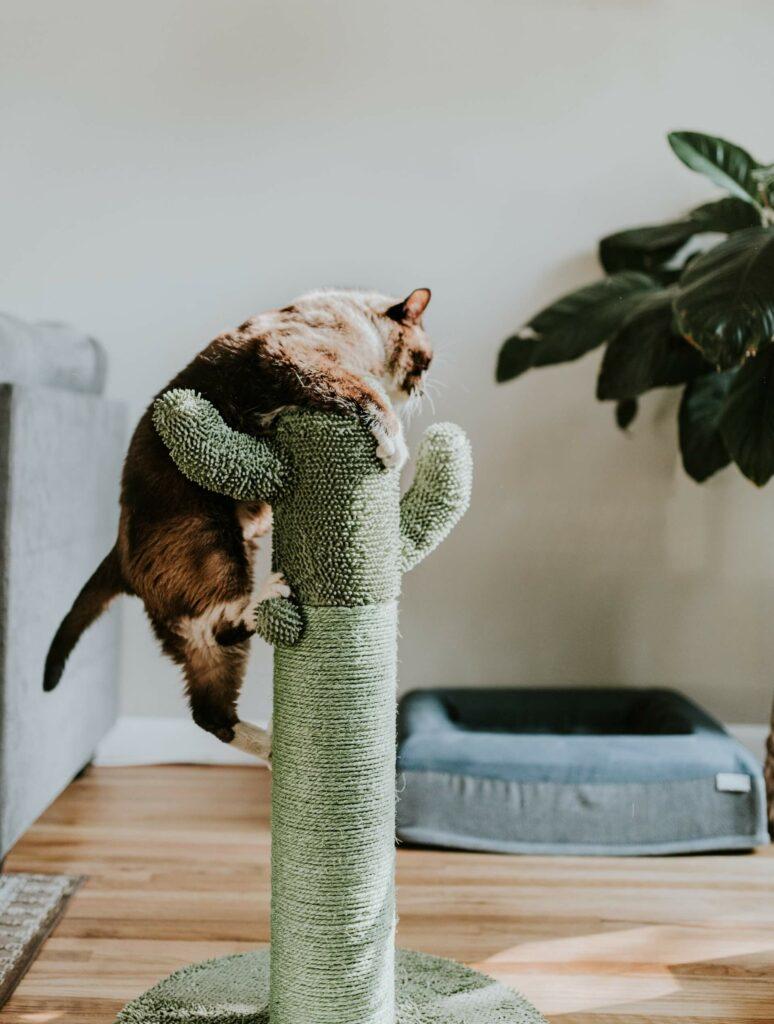 Kat kruipt op een krabpaal die eruitziet als een cactus