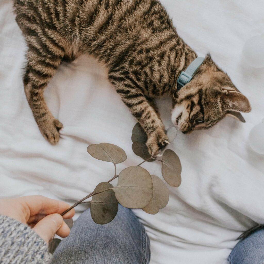 Kitten speelt met een takje met blaadjes